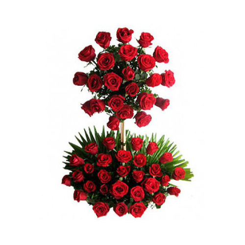 100 Red Roses!