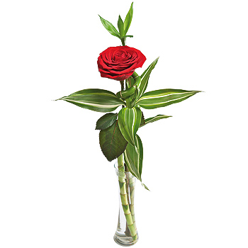 Single Red Rose in a vase!